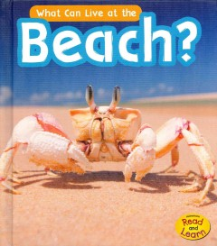 What can live at the beach? - John-Paul Wilkins