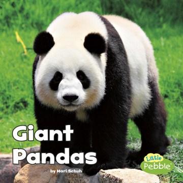 Giant pandas - Mari C Schuh
