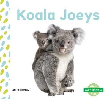 Koala joeys - Julie Murray