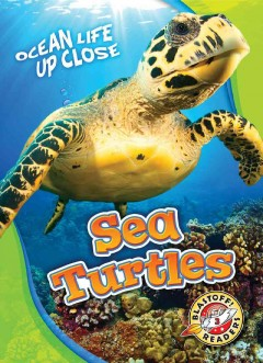 Sea turtles - Kari Schuetz