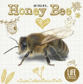 Life cycle of a honey bee - Grace Jones