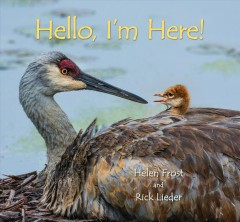 Bookjacket for  Hello, I'm here!