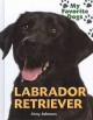 Let's hear it for labrador retrievers.