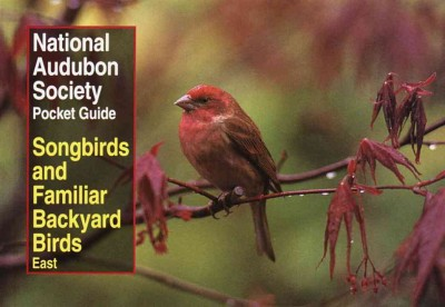 Songbirds and Familiar Backyard Birds: Eastern Region