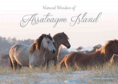 Natural Wonders of Assateague Island