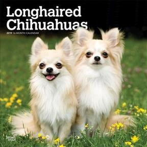 Longhaired Chihuahuas 2019 Cal(Wall)